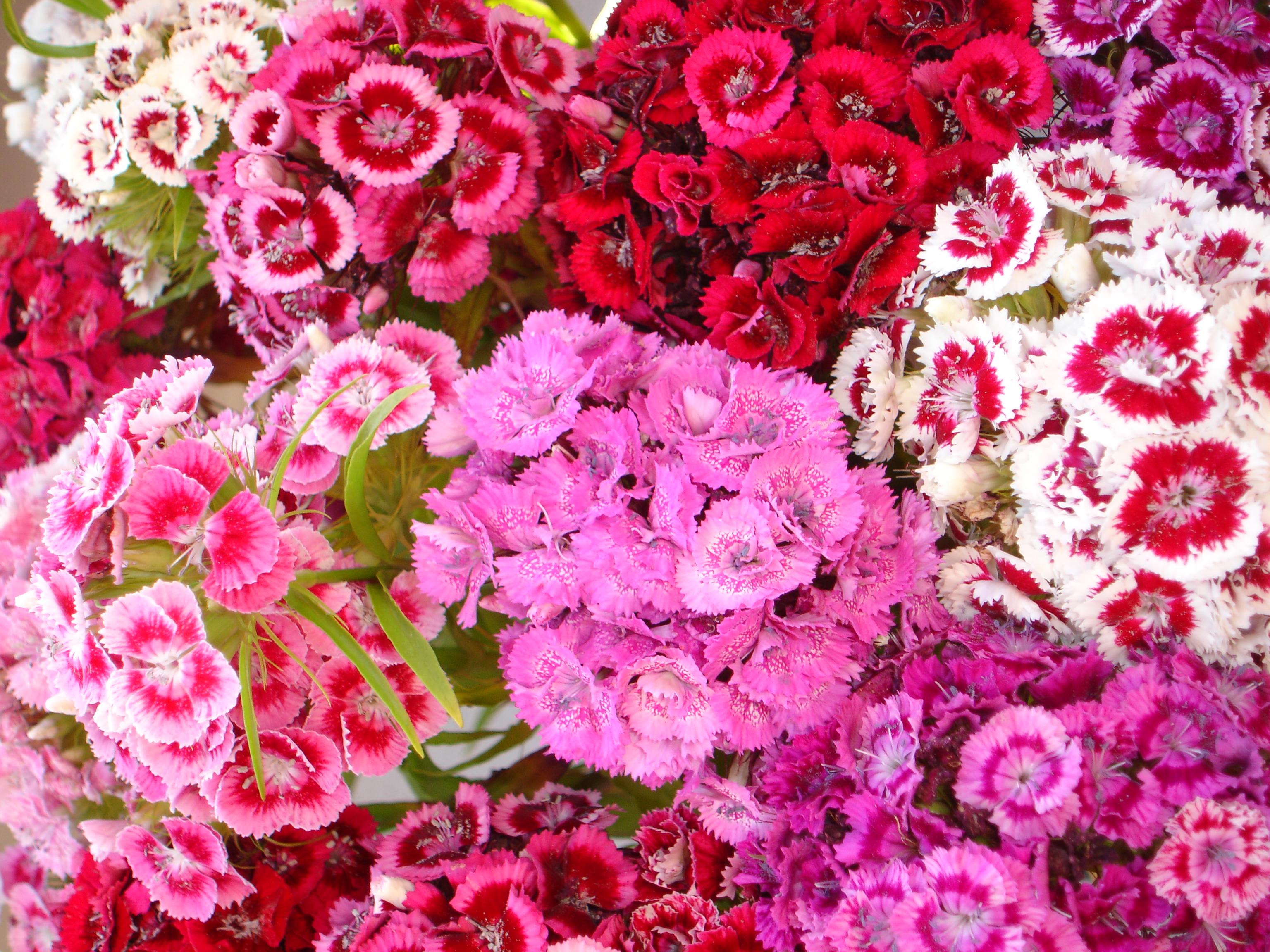 12 Summer Wedding Flowers in Season  The Spruce