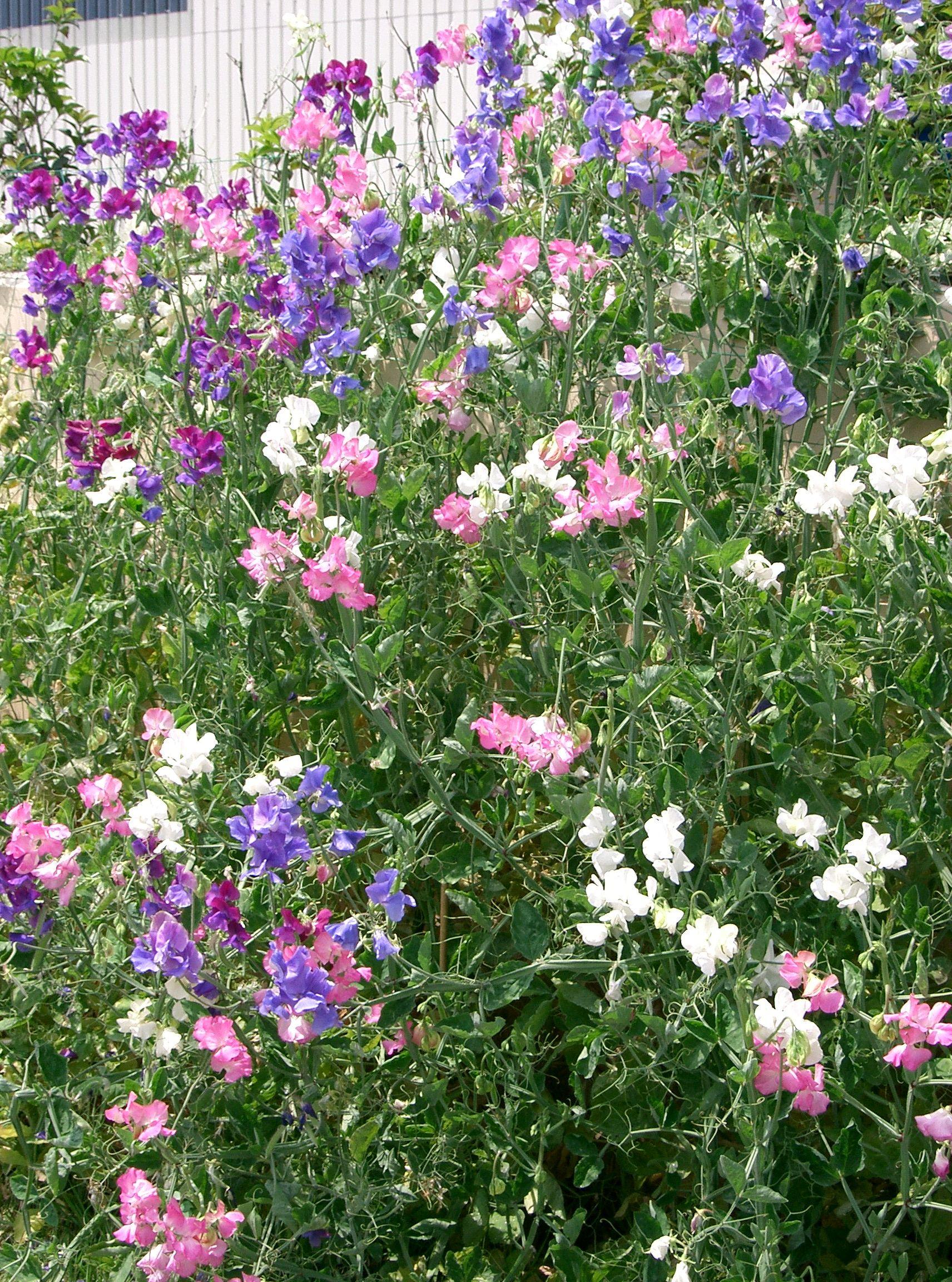Sweet Pea S Floral Designs Of Distinction Lagrange Ga