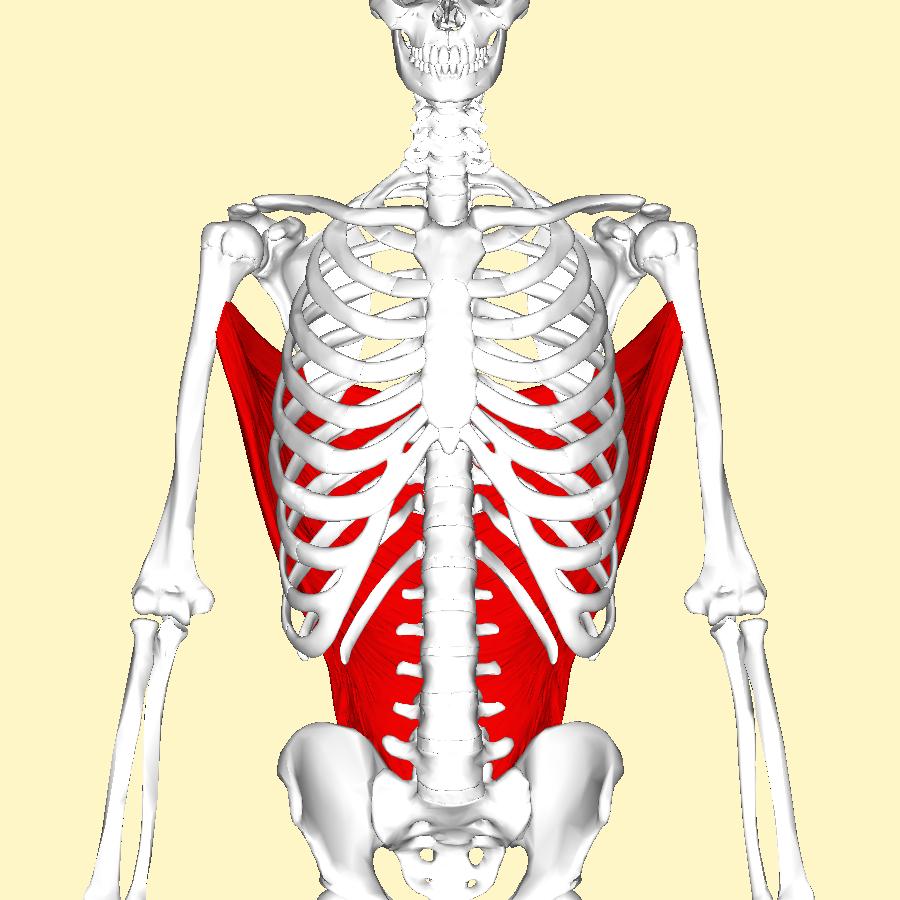 Image Result For Symptoms Of Bone