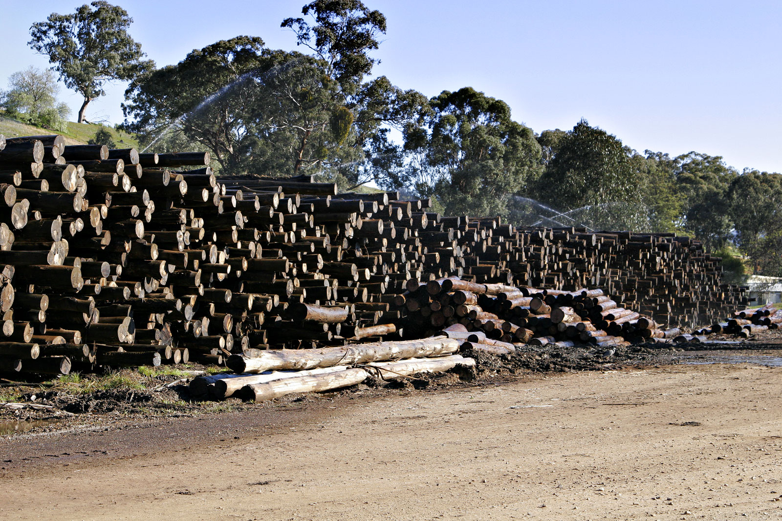 Lumber - Simple English Wikipedia, the free encyclopedia