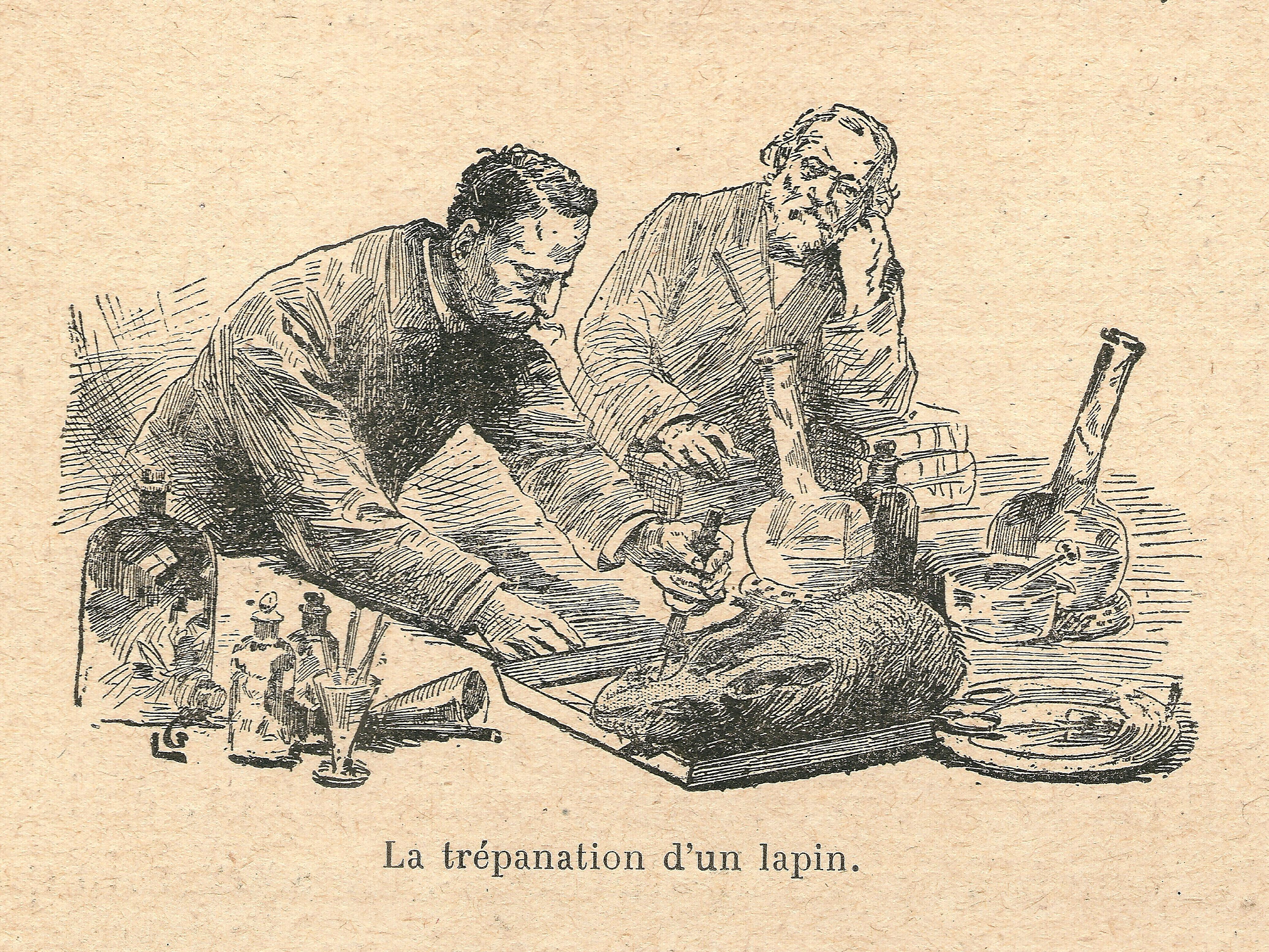 Filelouis Pasteur Trépanation Dun Lapinjpg Wikimedia
