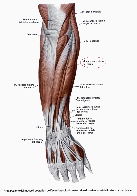 Come trattare la posizione di vene rossa