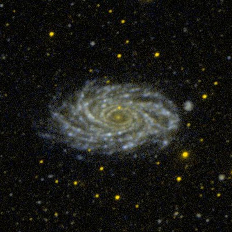 NGC 2336 – Wikipédia, a enciclopédia livre