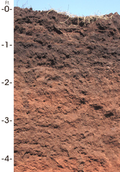Soil wiktionnaire for Garden soil definition