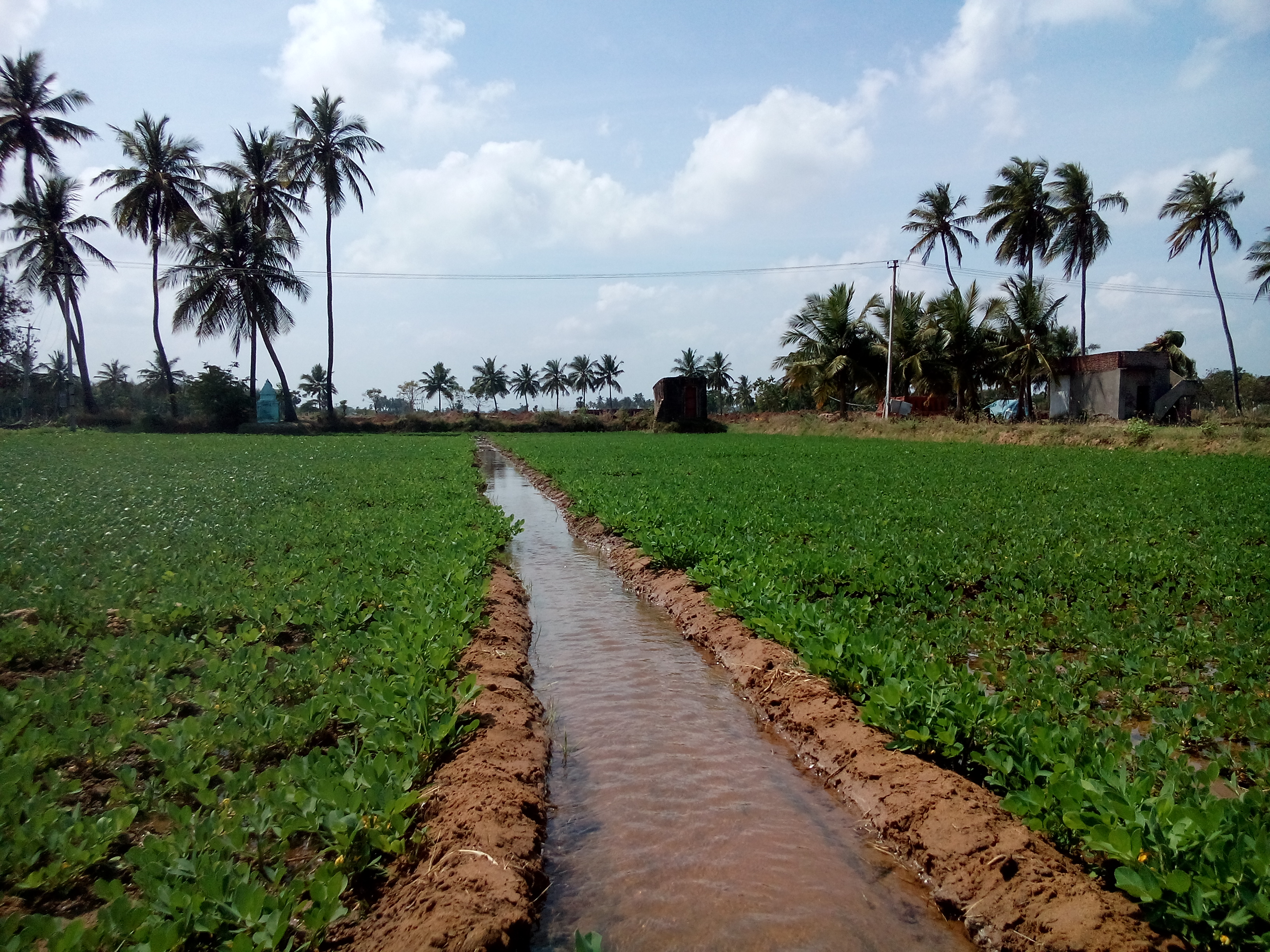 Wiki irrigation upcscavenger for What is terrace farming definition