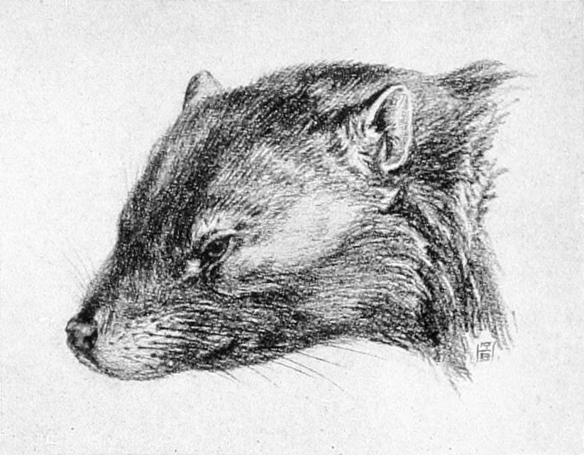 Familias de mamíferos: Multituberculados