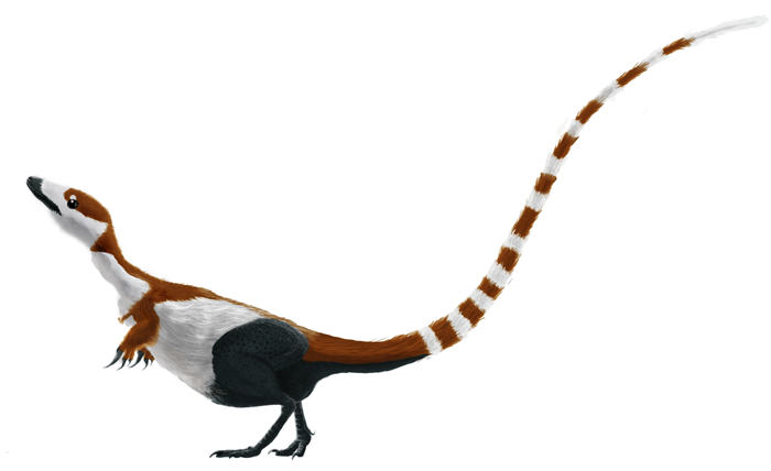 Reconstruction illustrating colouration as suggested by the study of preserved melanosomes.Black regions and most of the sides lack fossilised feathers.