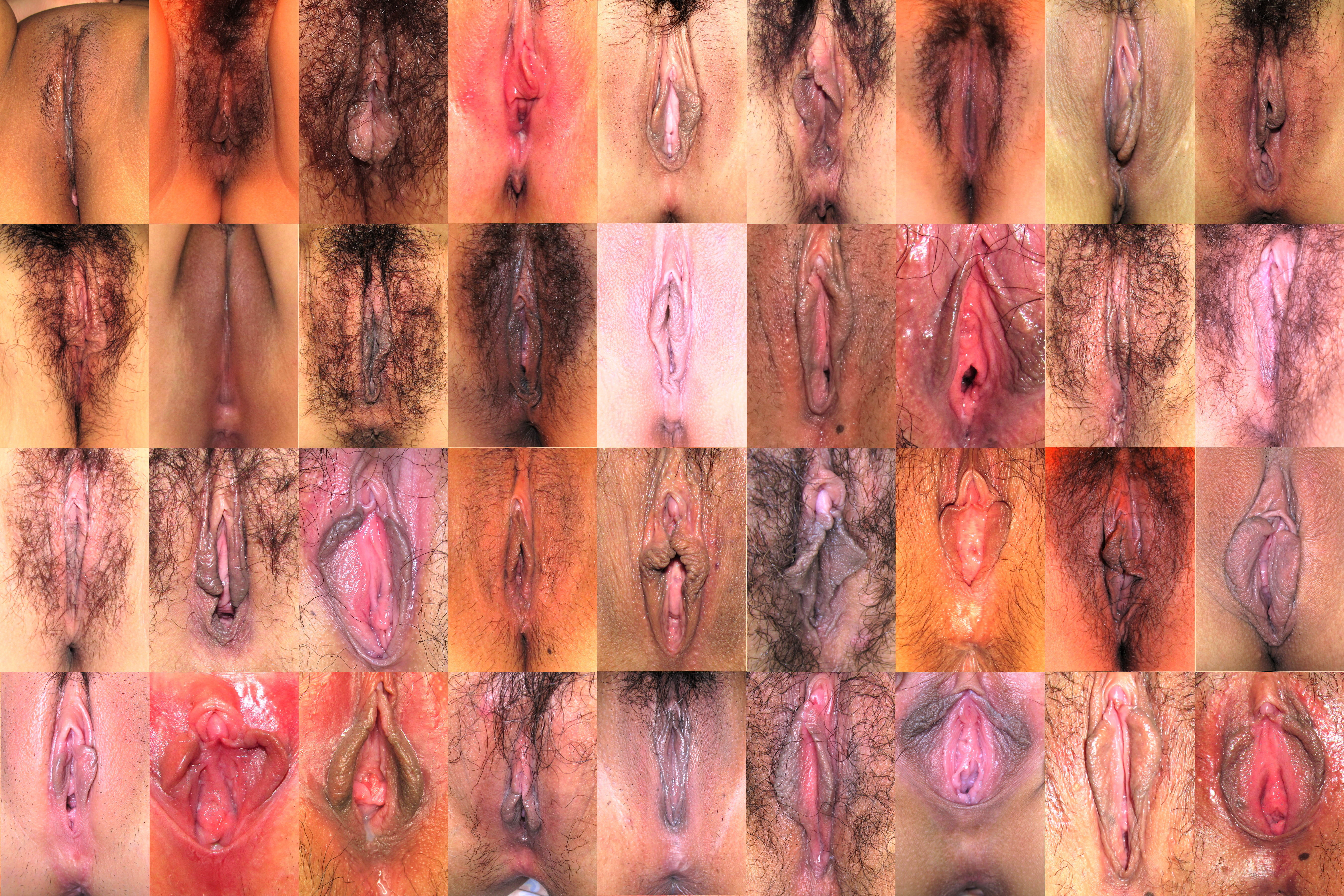 [Bild: Vagina_collage_16.jpg]