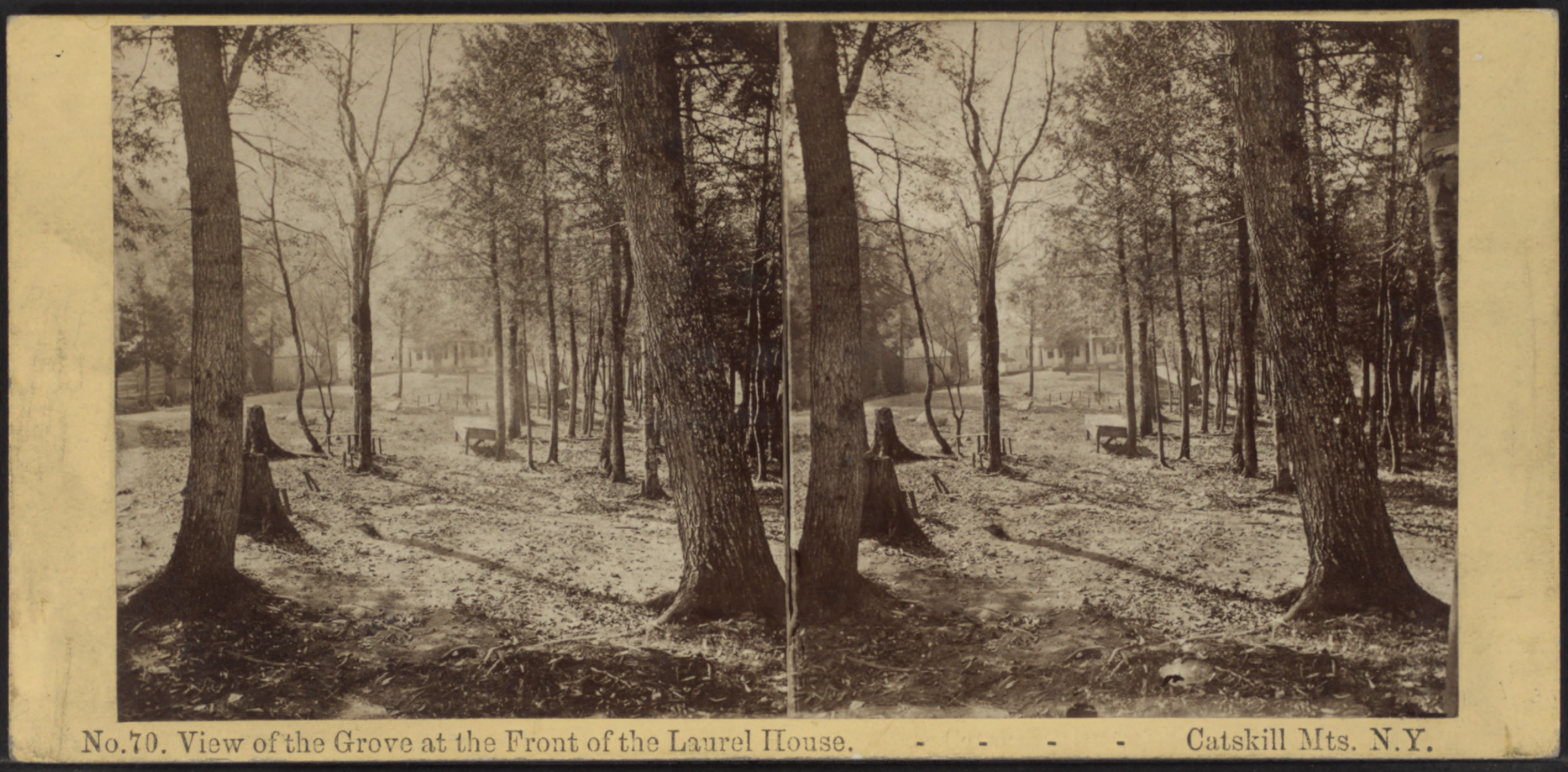 File view of the grove at the front of the laurel house for The laurel house