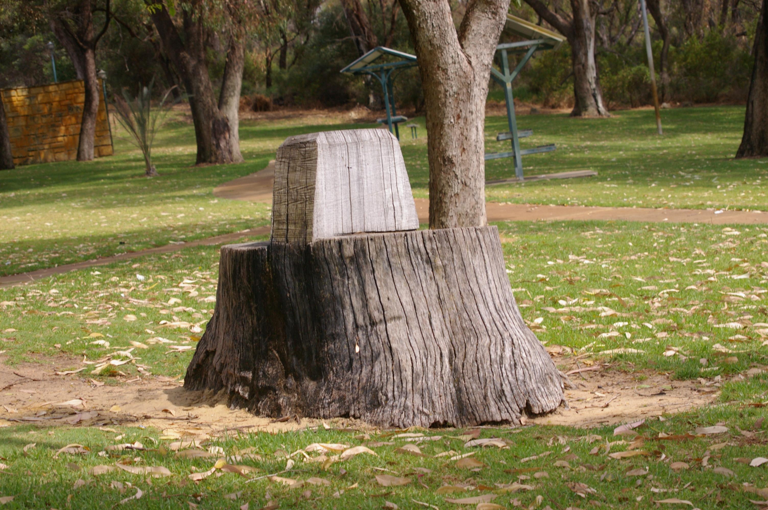 Tree Stump Seats Filewtj Parker D Neil Hawkins Park Tree Stump Seat 2jpg