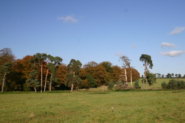 File:Woodland near Icklingham - geograph.org.uk - 276052.jpg