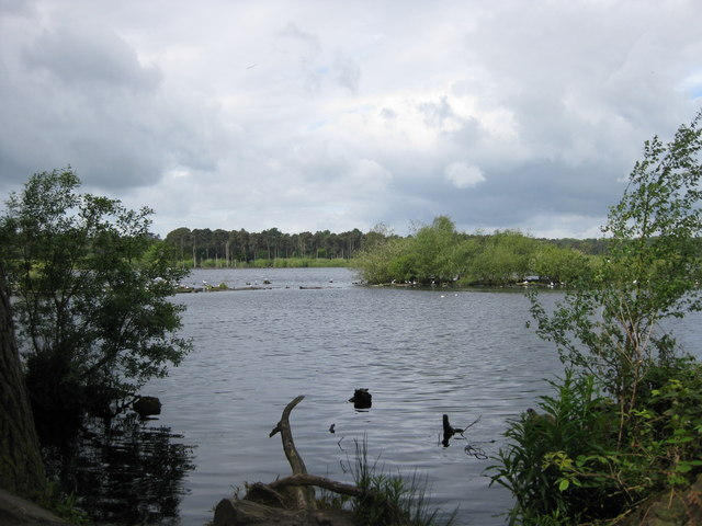Blakemere Moss, Delamere - geograph.org.uk - 1313506