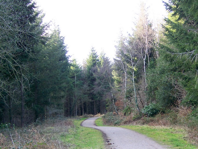 Bridleway, Puddletown Forest - geograph.org.uk - 1180935