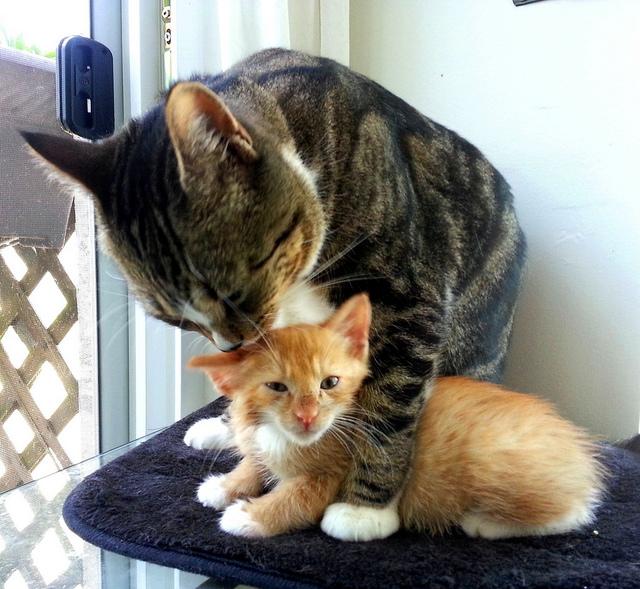 cats groom then bite