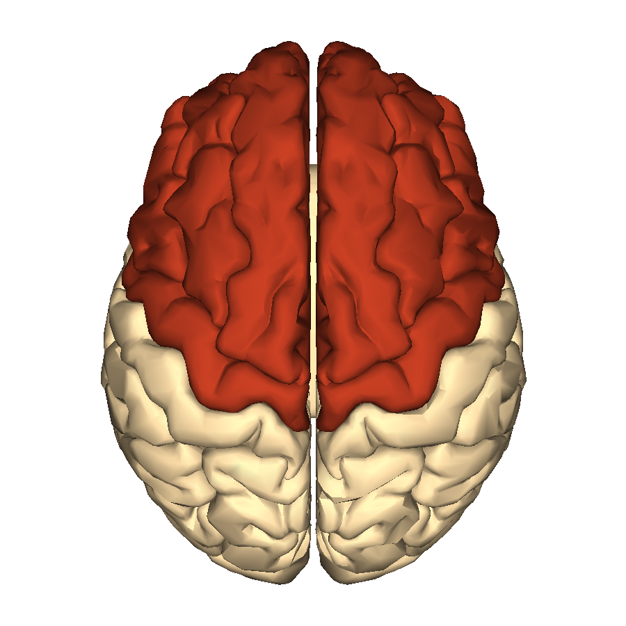 Filecerebrum Frontal Lobe Superior Viewg Wikimedia Commons