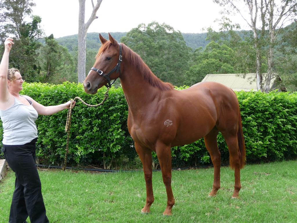 Chestnut Horse - photo#13
