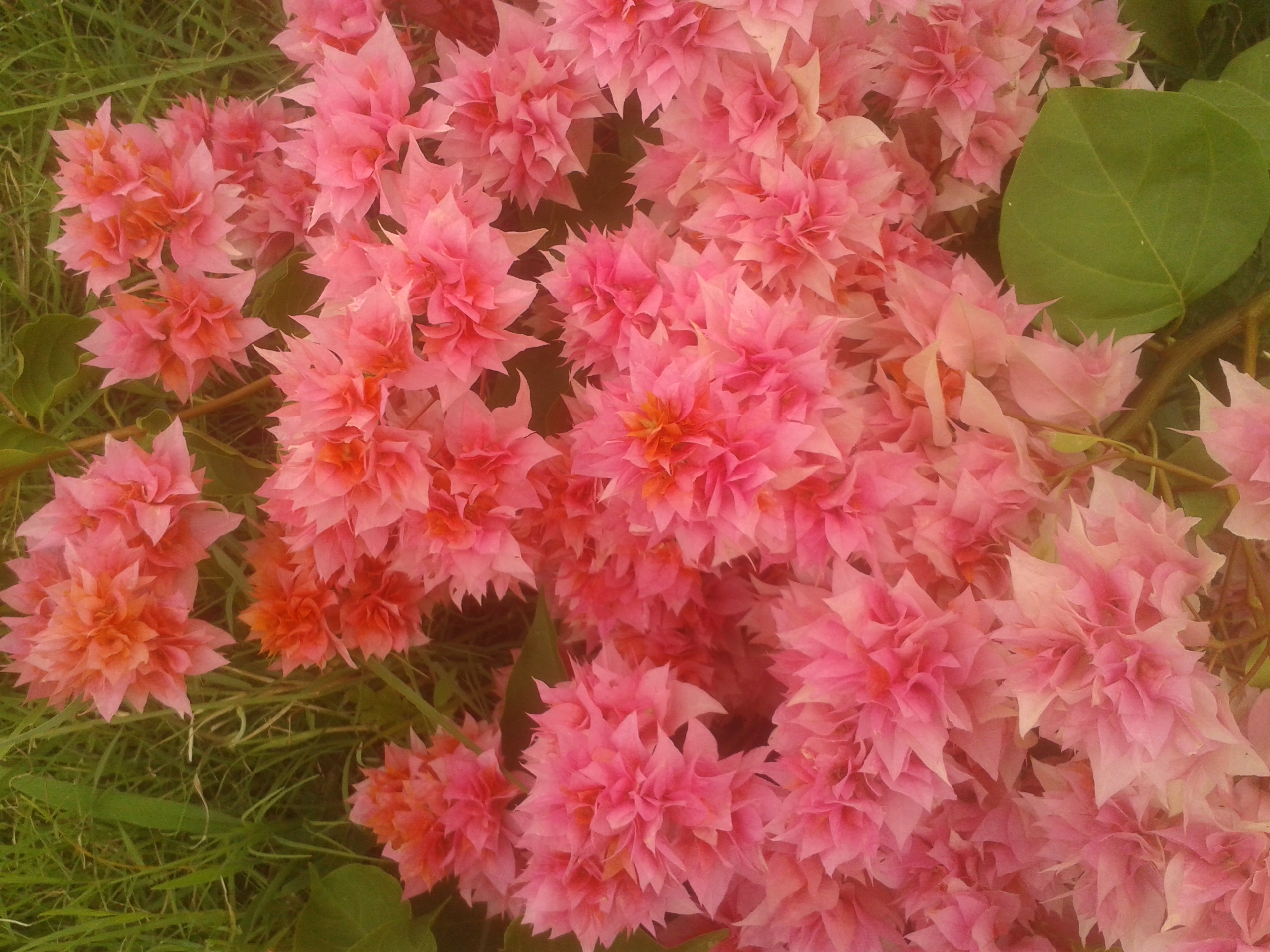 Filecolorful Paper Like Flowersg Wikimedia Commons