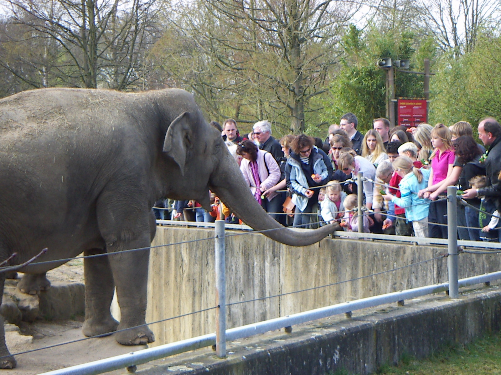 Animals Kept in Zoos
