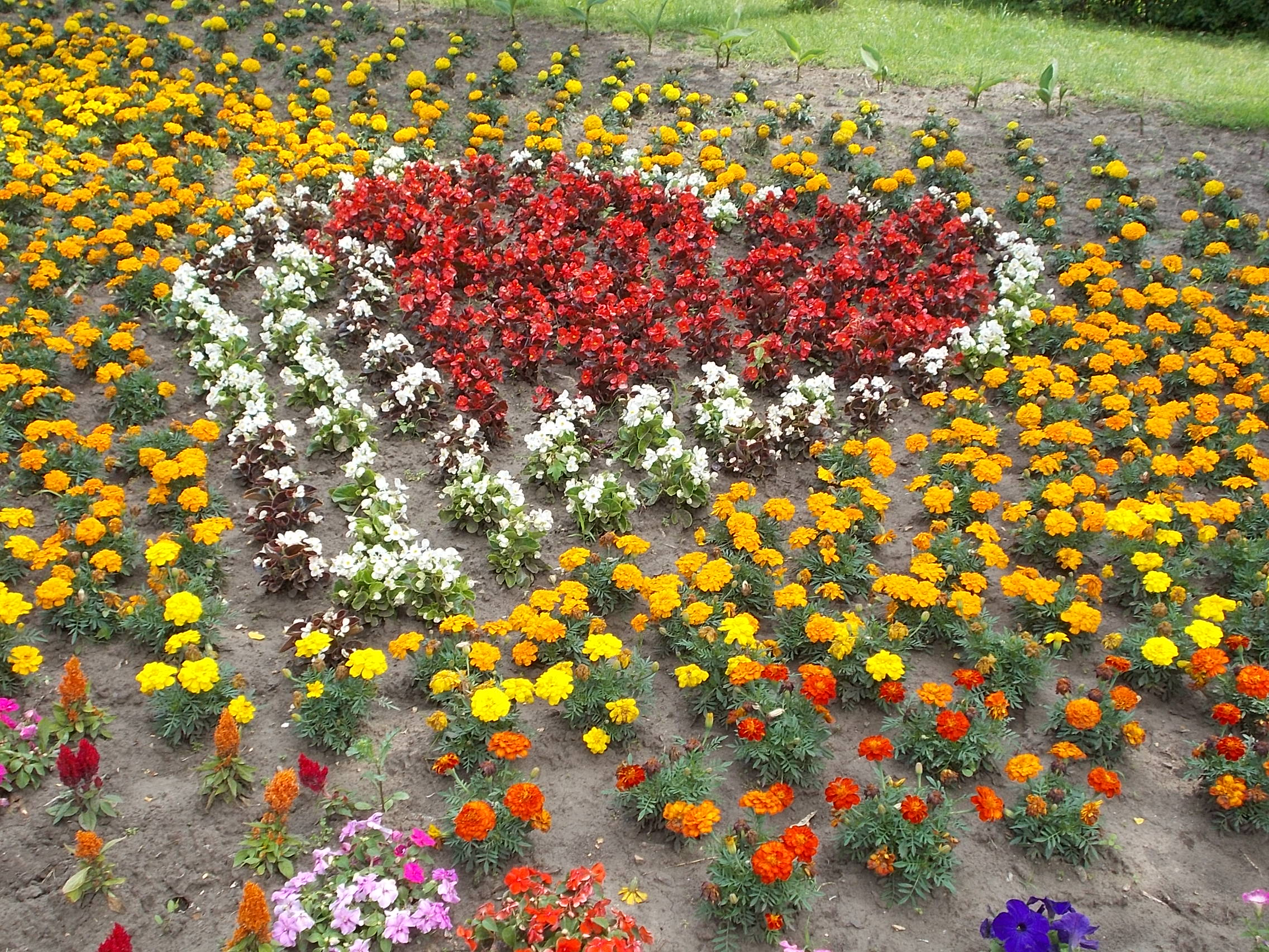 Datei flower bed shaped heart central park west gy mr for Flower bed shapes designs