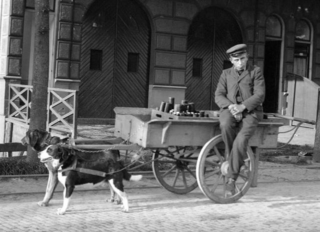 Vintage Dog Pictures Not This Trip Ole Pal