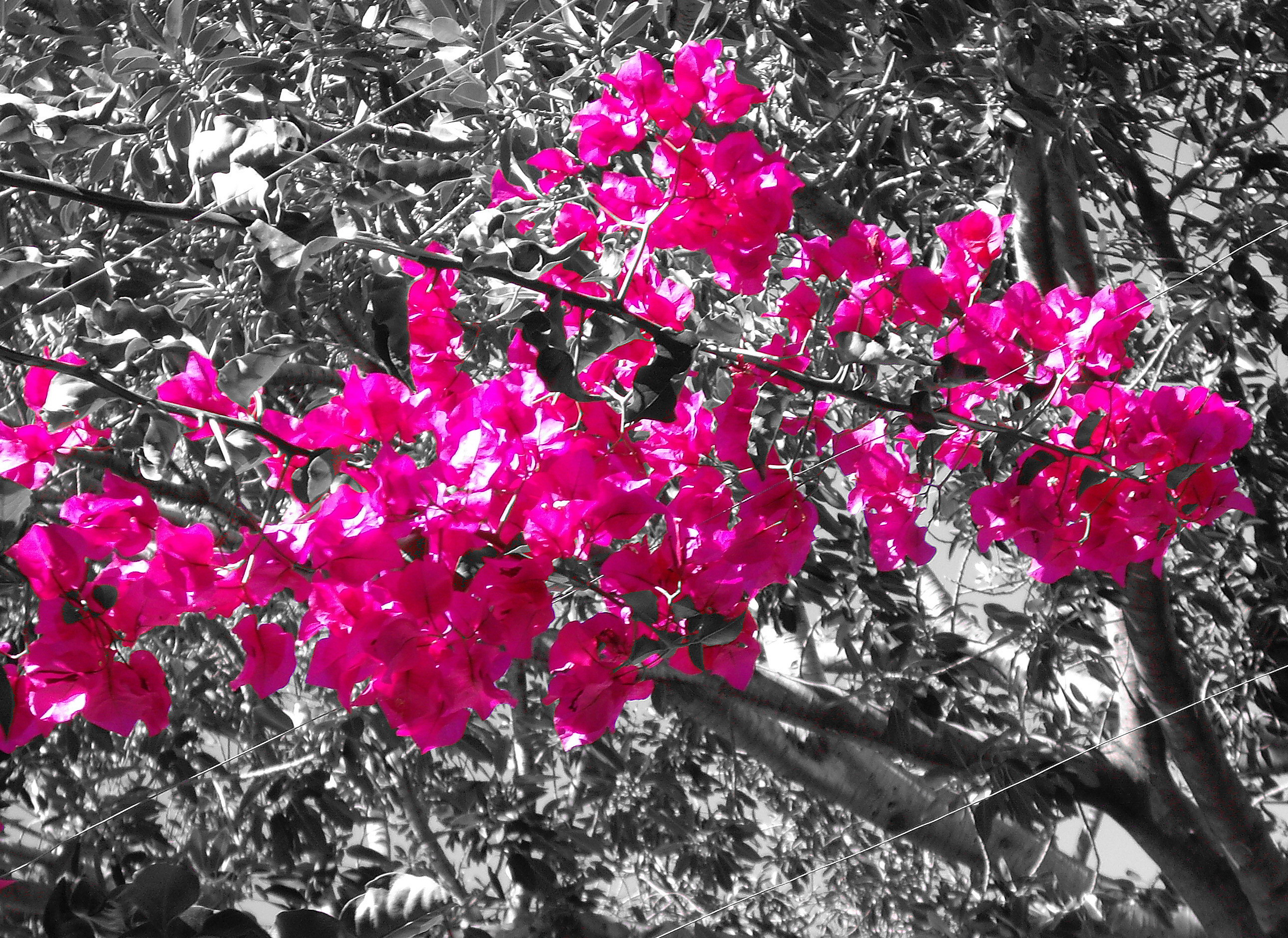 Pink color Hot_pink_in_nature