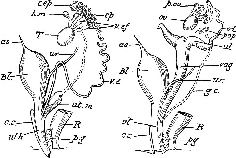 Fileimage From Page 320 Of An Introduction To The Study Of The
