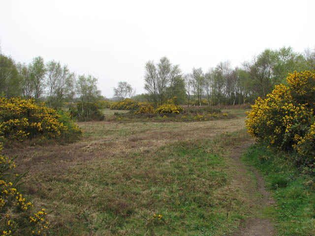 Kelling Heath in mid April - geograph.org.uk - 1249329