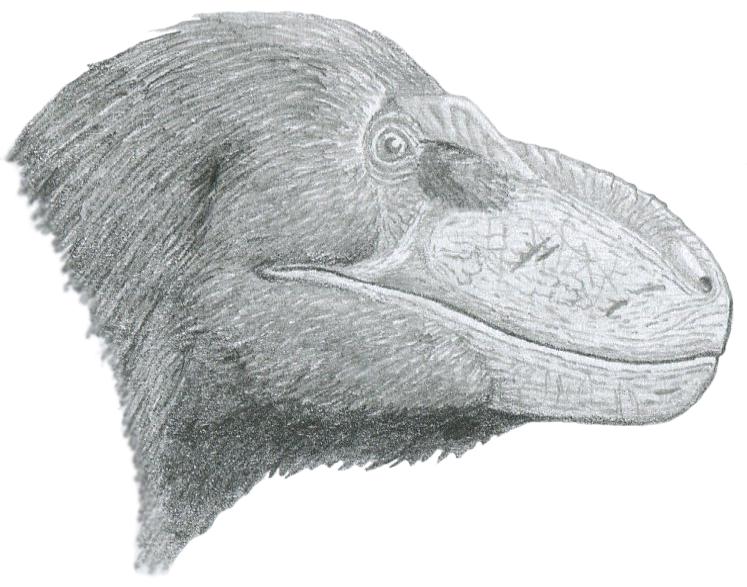 tiranosaurio - Nanuqsaurus (El Tiranosaurio de Alaska) Nanuqsaurus