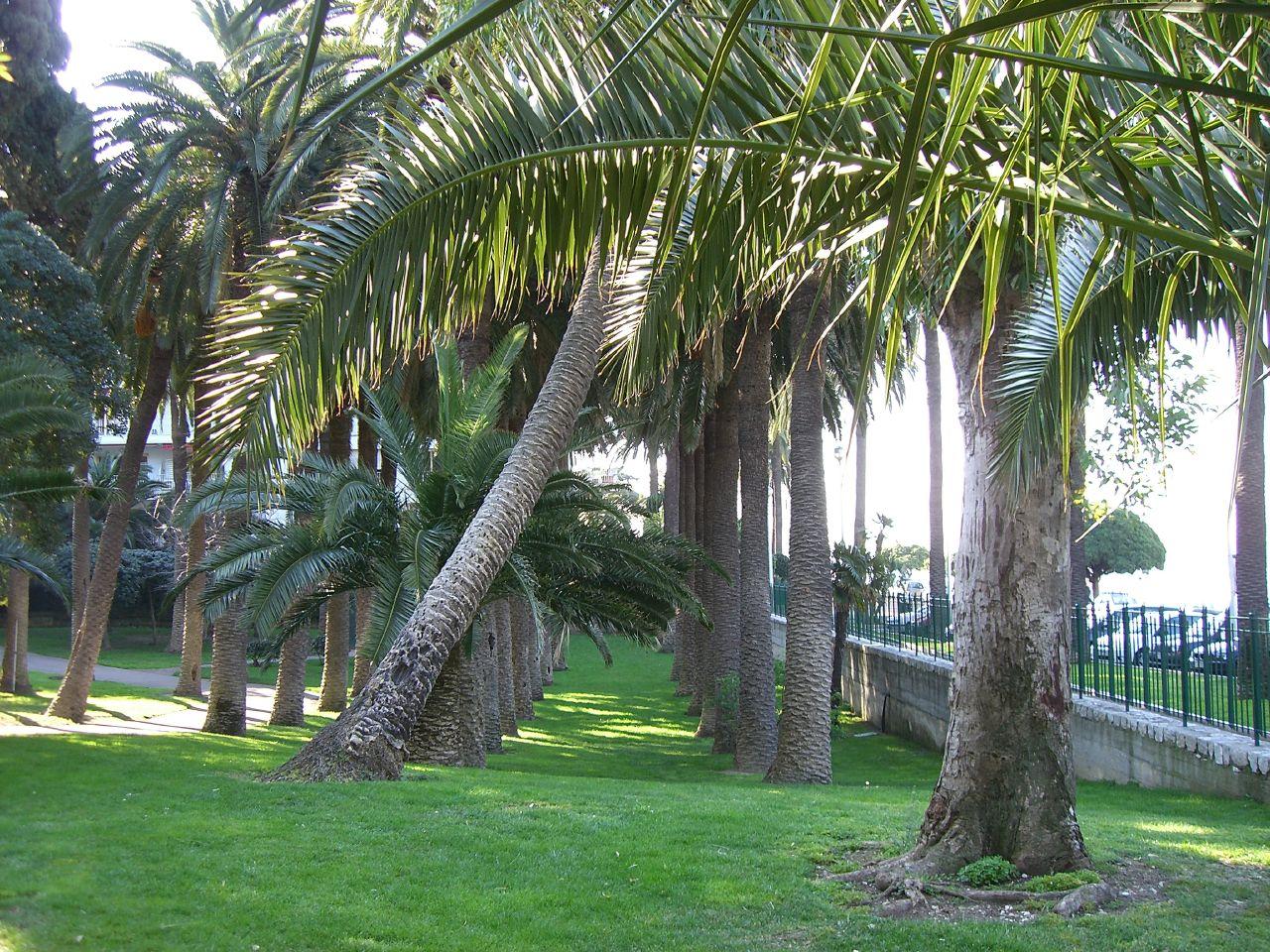 Villa Paradiso Palm Cove For Sale