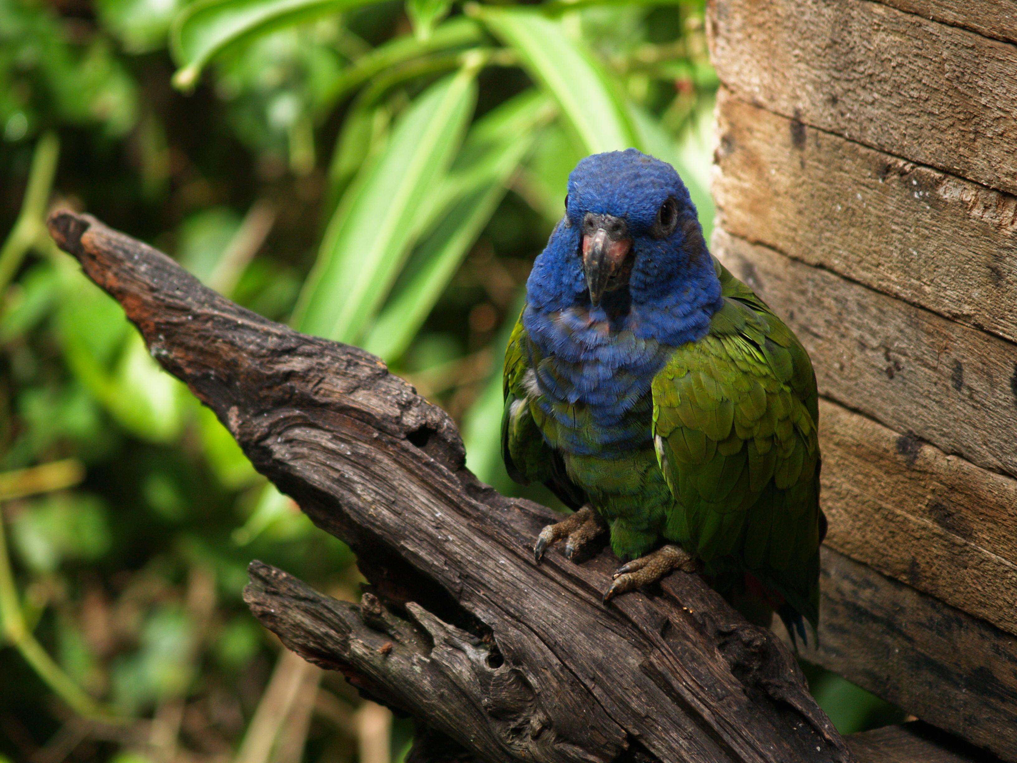verde animal: