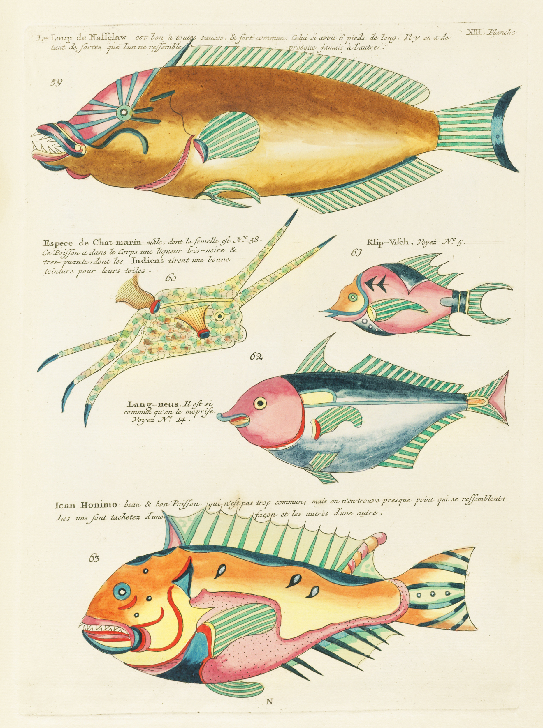 Filesurreal Illustration Of Fishes And Crabs Found In