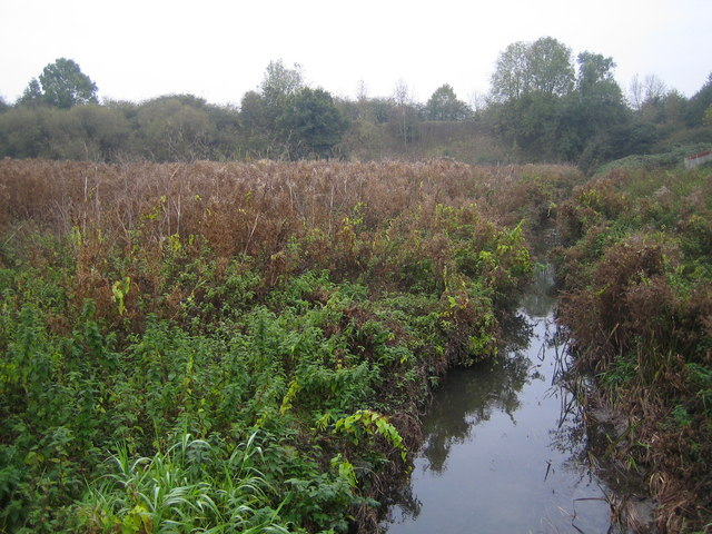 Swindon, Rushy Platt Nature Reserve - geograph.org.uk - 599709