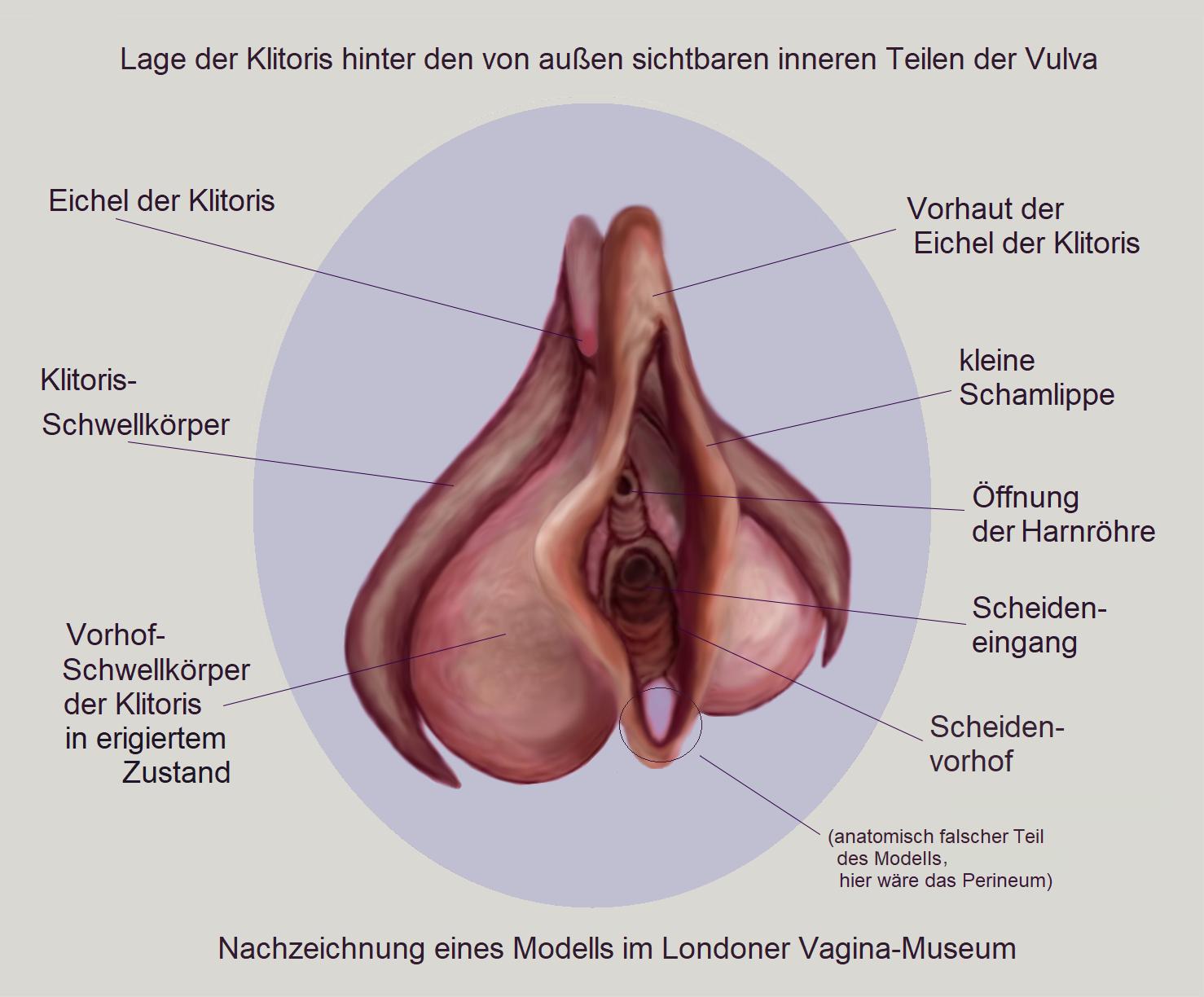 Von vaginas