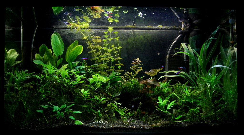 File 125l Planted Tank Jpg Wikimedia Commons