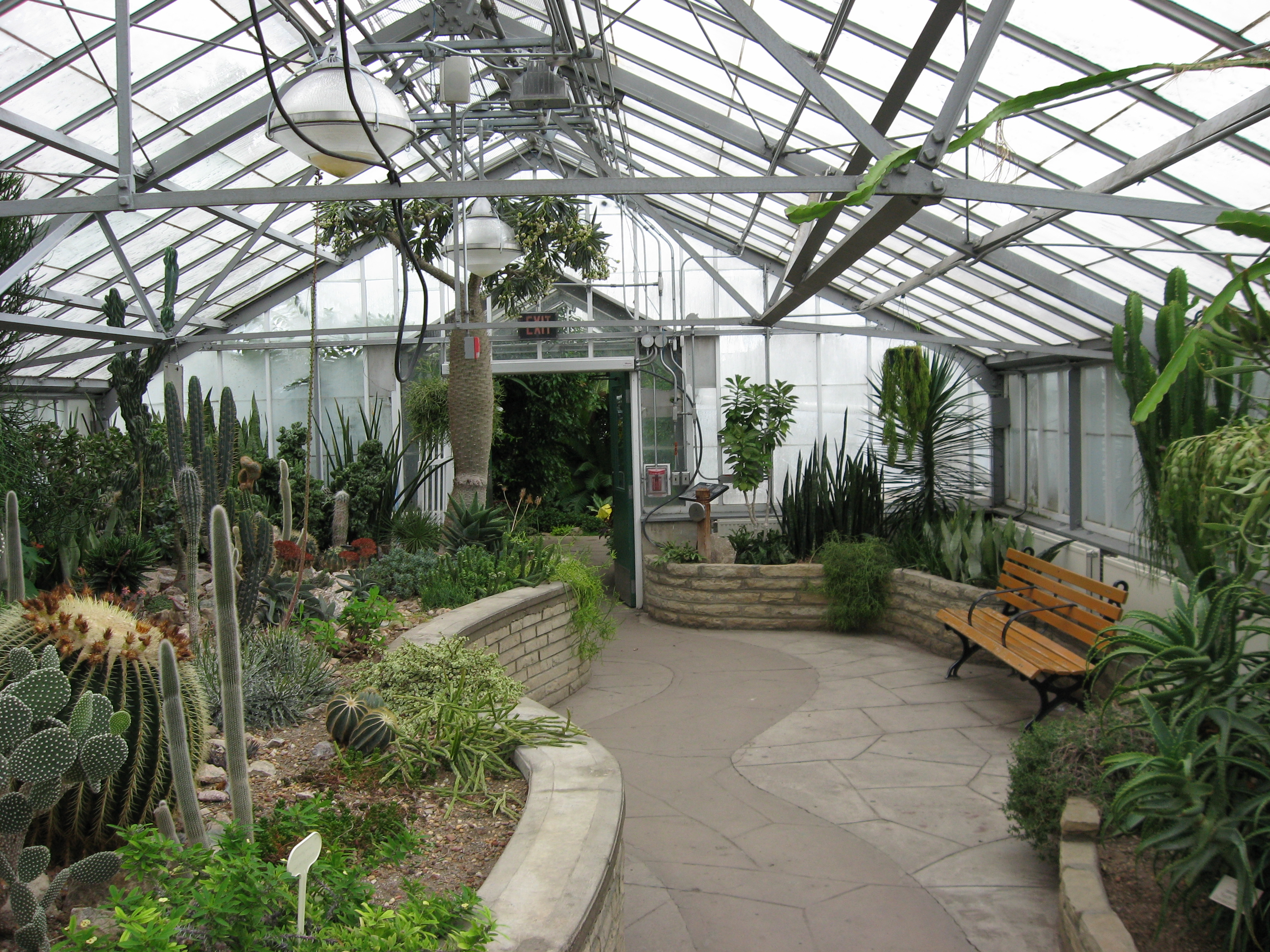 file allan gardens cactus wikimedia commons. Black Bedroom Furniture Sets. Home Design Ideas