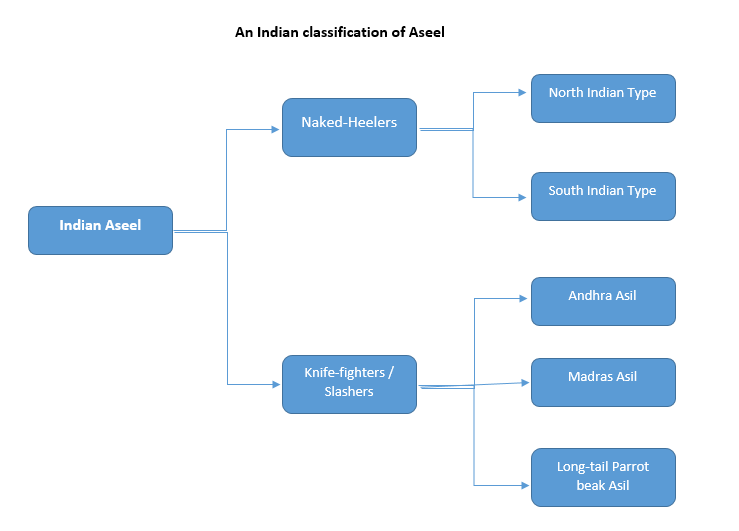 An Indian Classification of Aseel