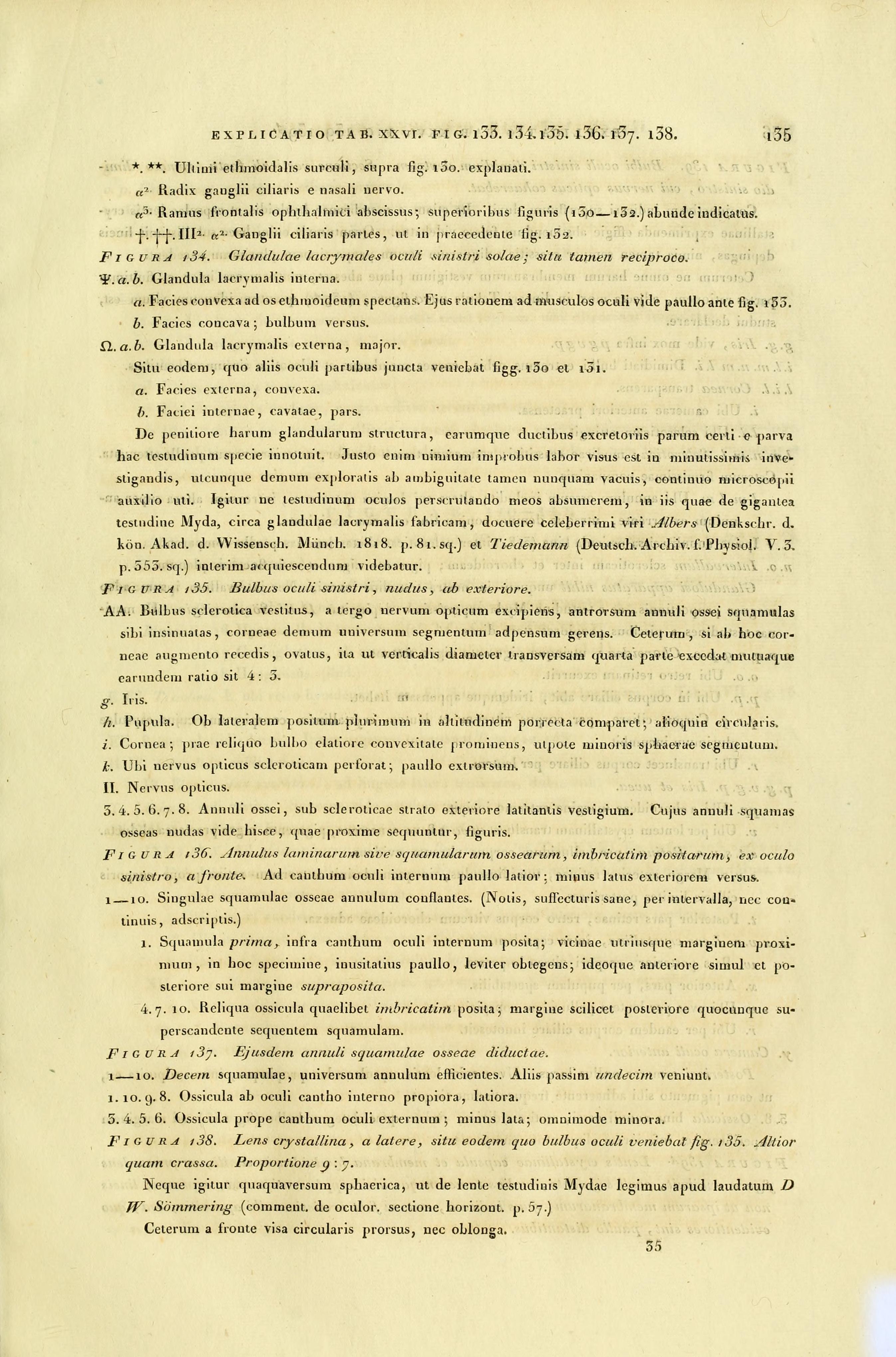 File:Anatome testudinis Europaeae (Page 135) BHL2969577.jpg ...