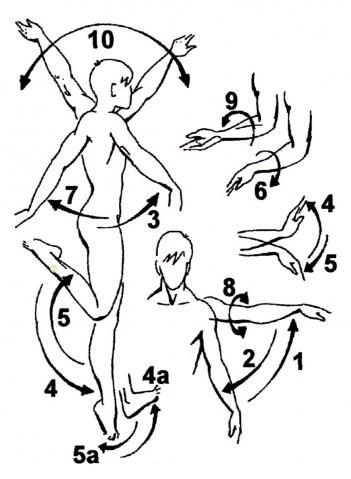 Anatomische Bewegungsbezeichnungen - Wikiwand