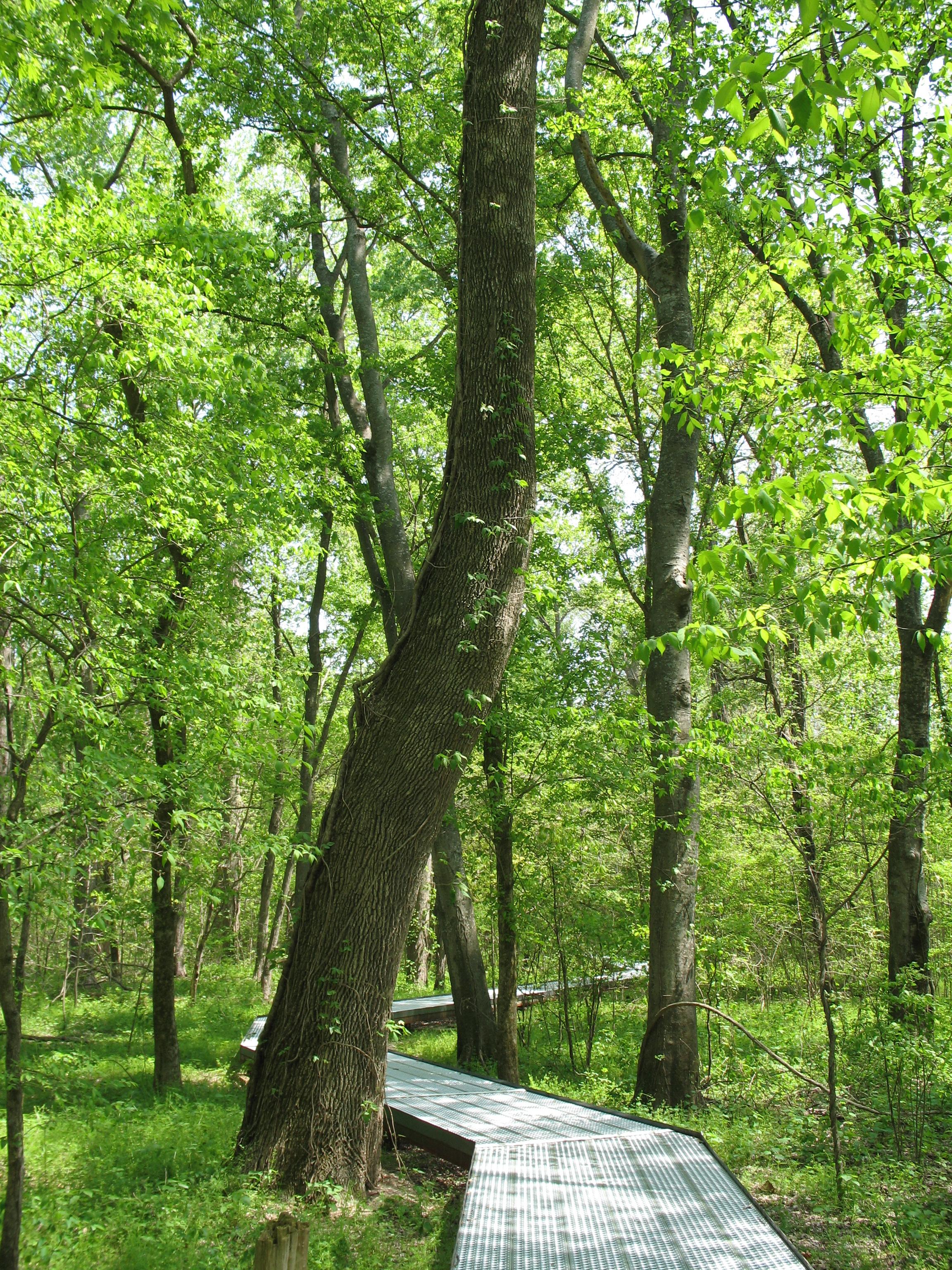 Big Oak Tree State Park Wikiwand