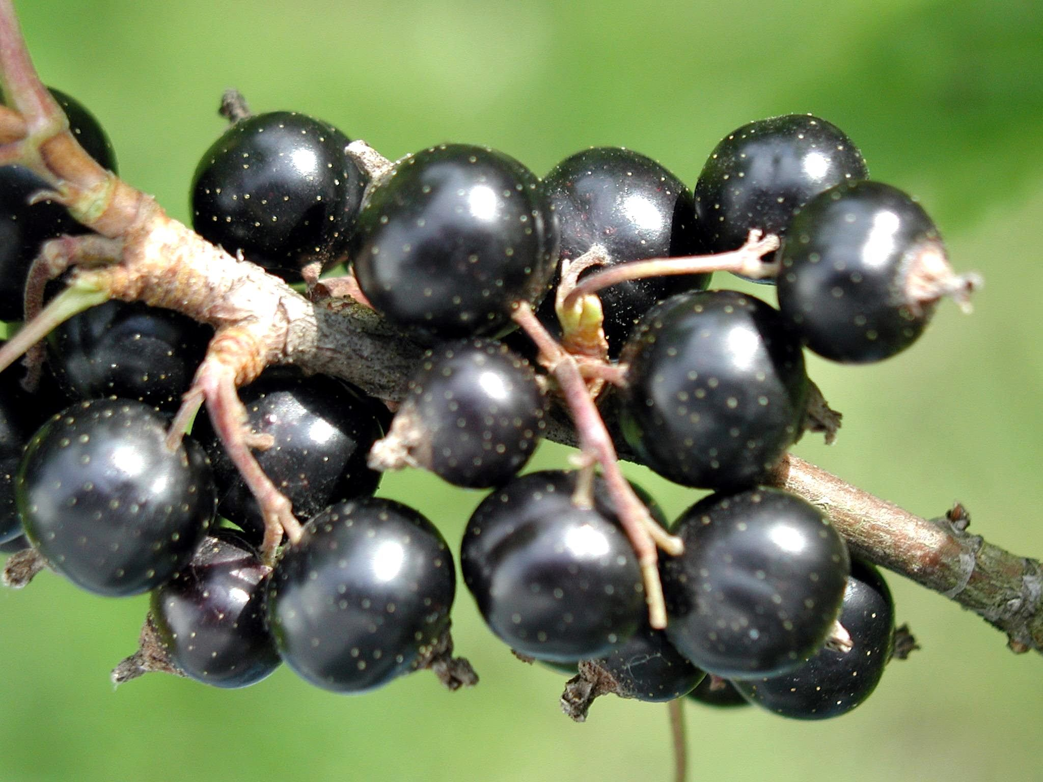 Black Seed Oil For A Cat With Brain Cancer