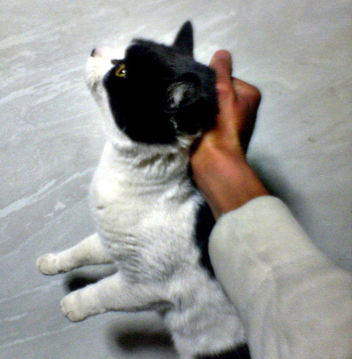 Grabbing A Cats Tongue While Its Out Gif