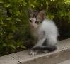 Cat kalyani.jpg
