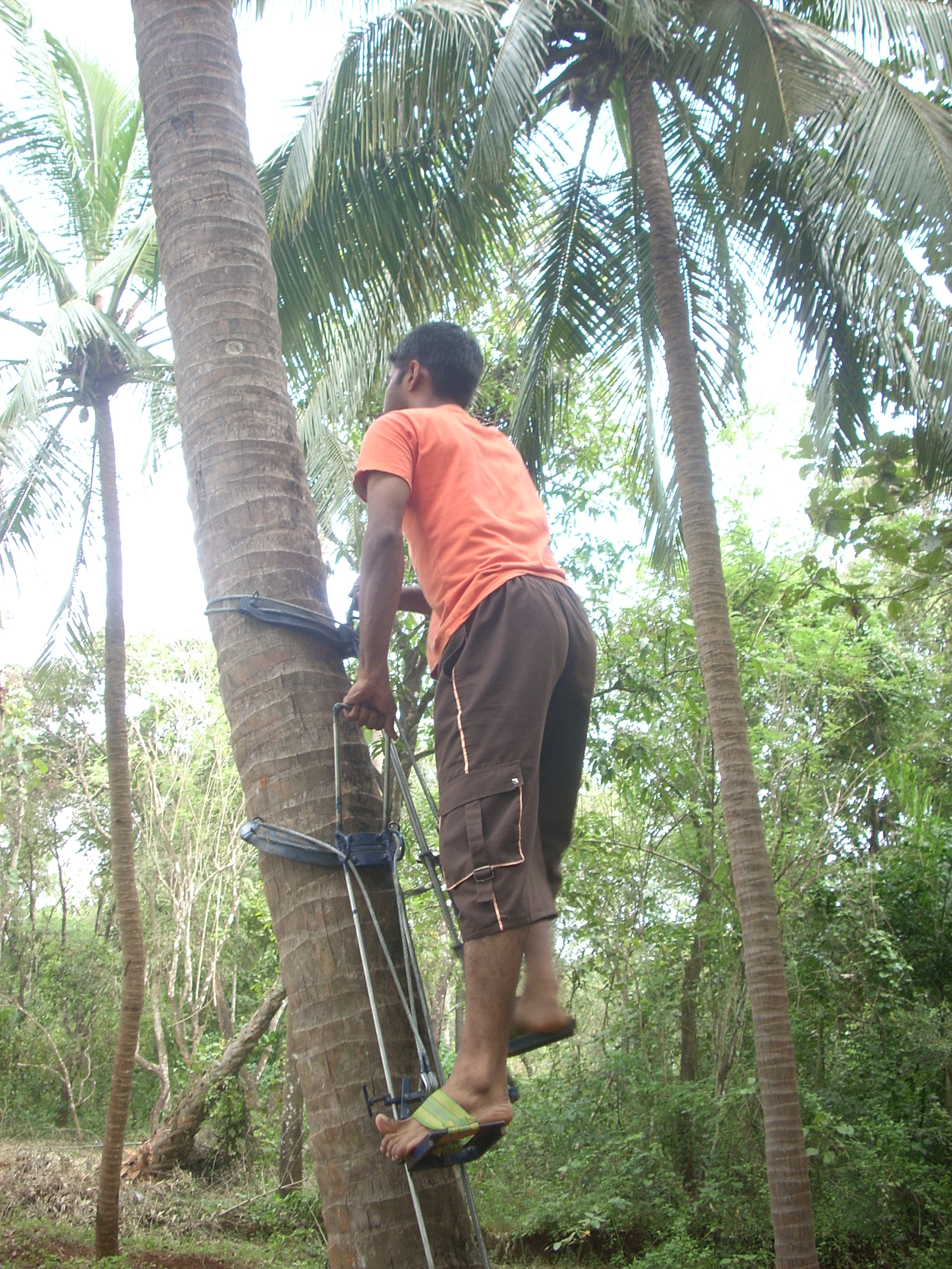 Coconut tree climbing machine pdf