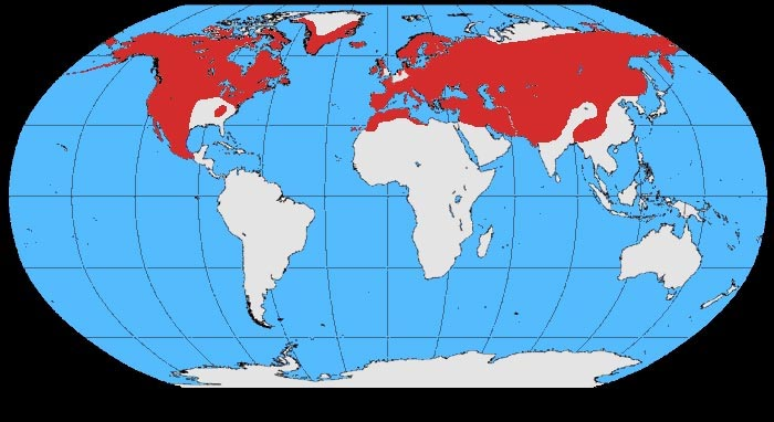 El Sillon Encantado Corvus_corax_map