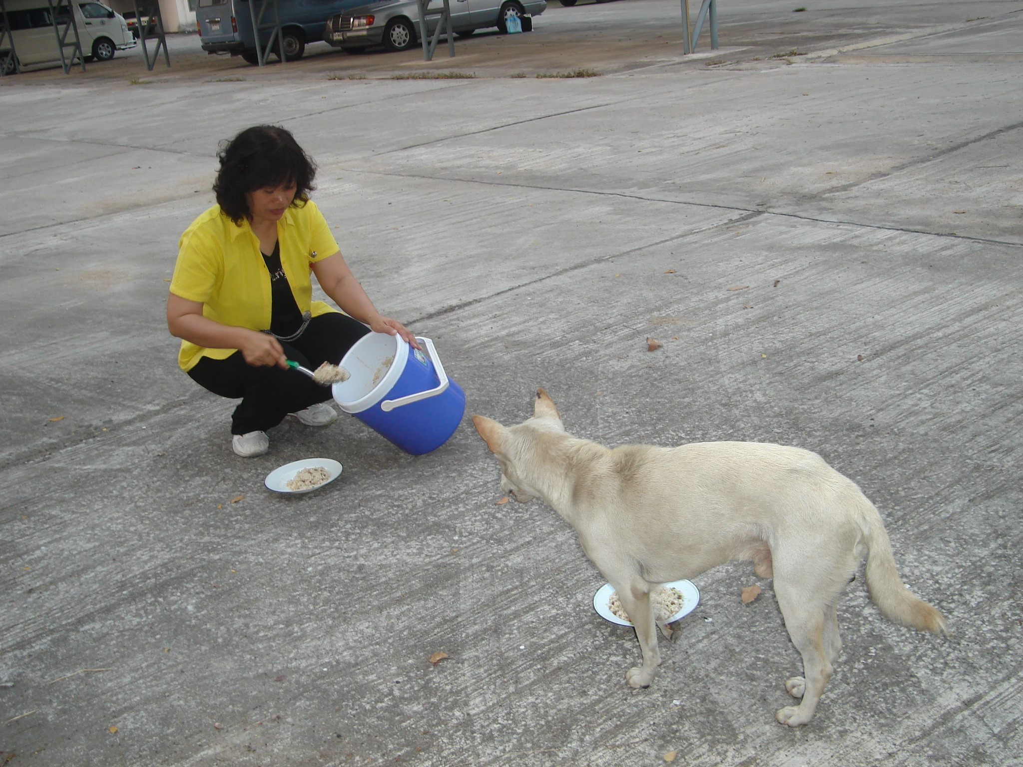 Feeding The Dog Human Food