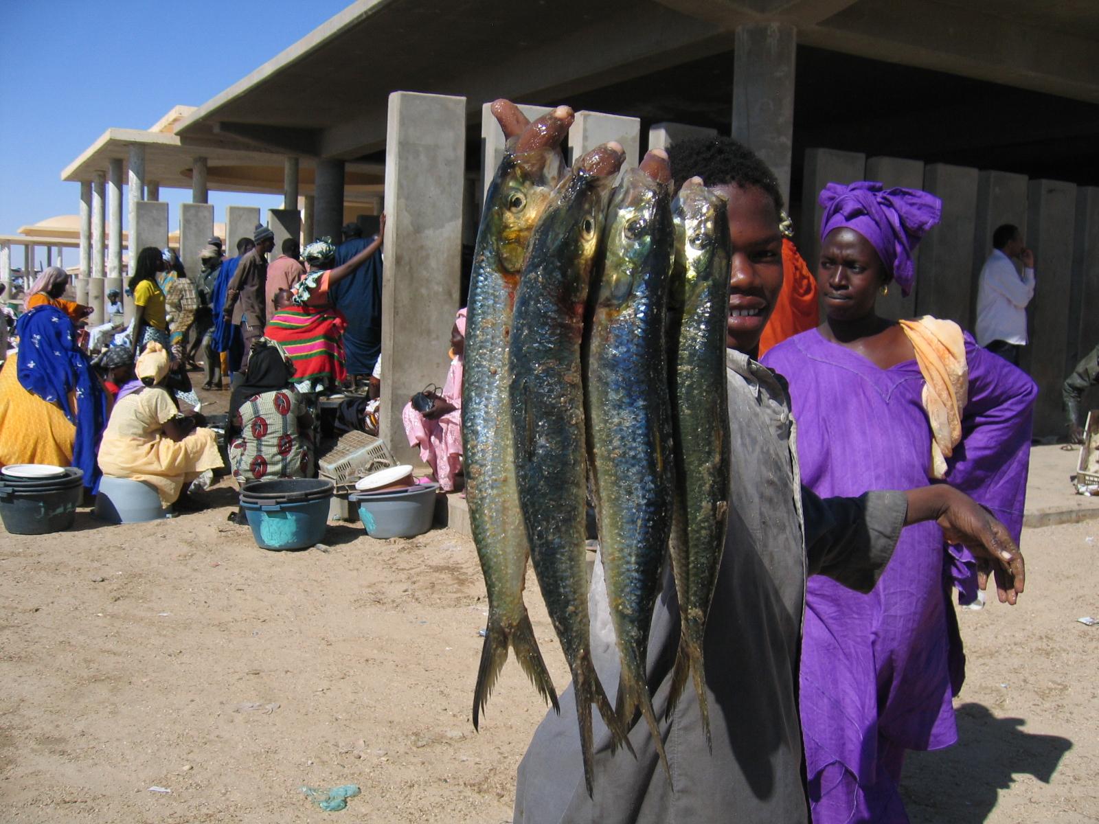 Dating mauritania