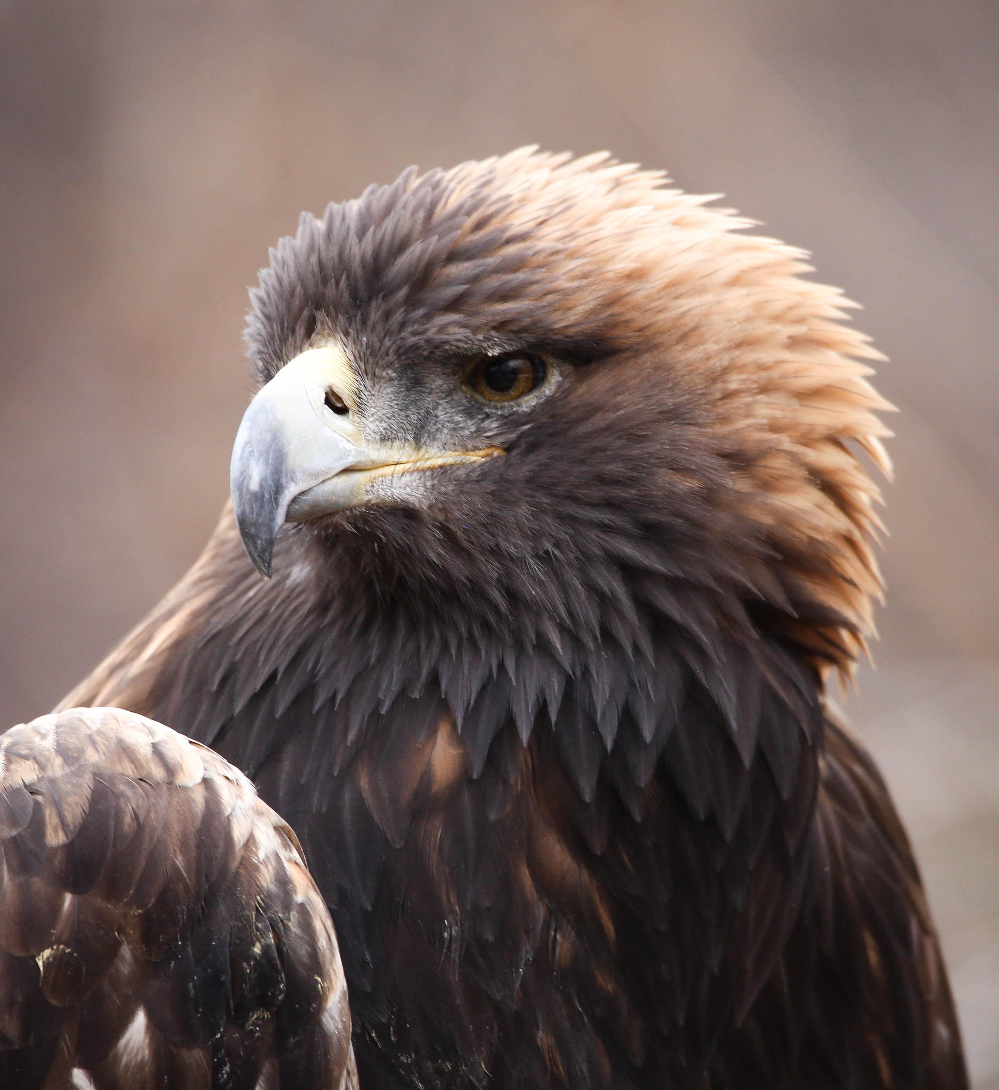 Filegolden Eagle 38549882626 Jpg