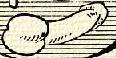 Hímvessző (heraldika).PNG