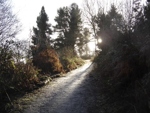 Hartshill Hayes Country Park - geograph.org.uk - 3191