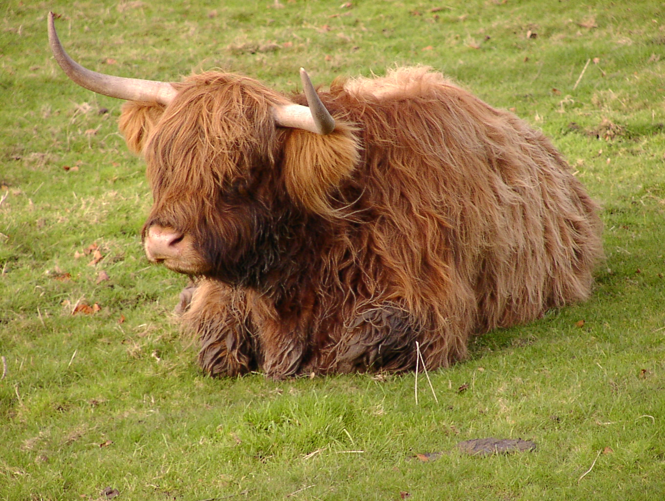 File Heelan Coo At South Ferriby
